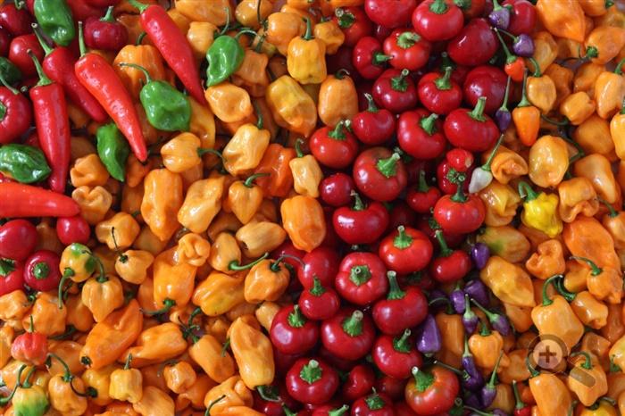 potraviny-zelenina-barvy-rajce-paprika